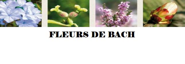 Initiation aux fleurs de Bach
