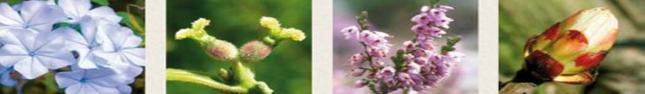 Bande fleurs